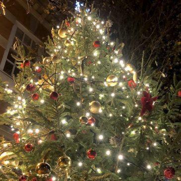 Roman Around the Christmas Tree